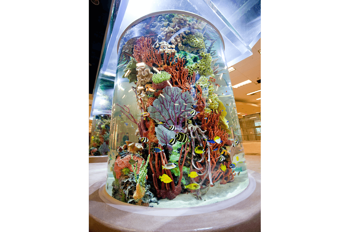 3-Scheels-Sporting-Goods-Aquarium